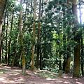 樹木園13