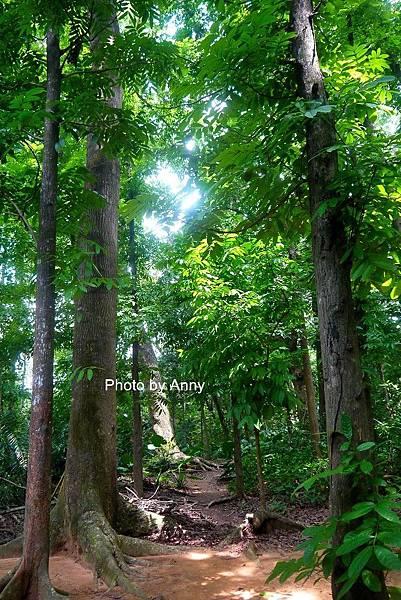 樹木園25