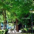 東光綠園道2.jpg