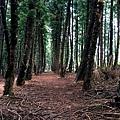 黑森林9.jpg