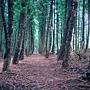 黑森林9-1.jpg