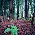 黑森林10.jpg