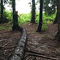 黑森林12.jpg