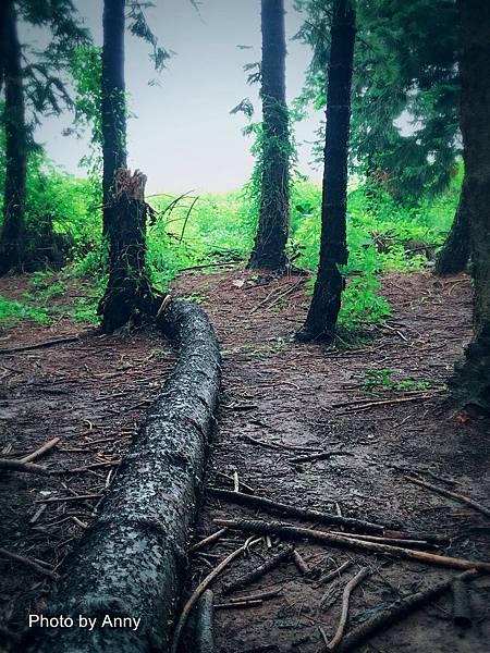 黑森林12-1.jpg