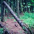 黑森林13.jpg