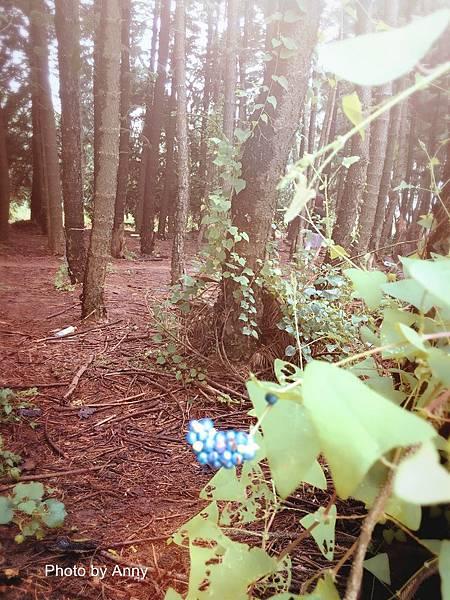 黑森林14.jpg