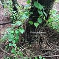 黑森林15.jpg