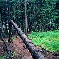黑森林16.jpg