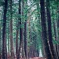 黑森林17.jpg