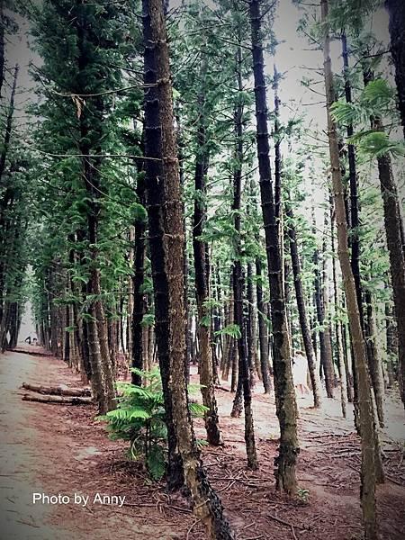 黑森林18.jpg