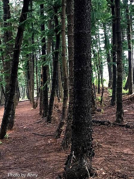 黑森林19.jpg