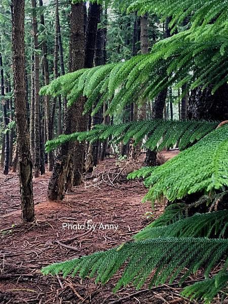 黑森林20.jpg