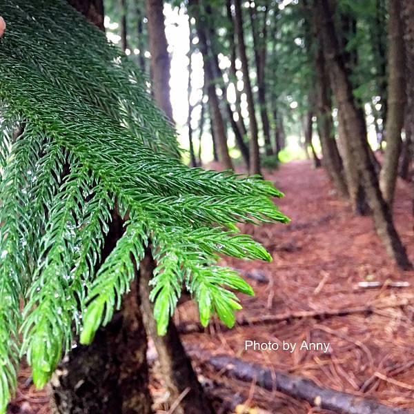 黑森林21.jpg