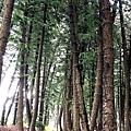 黑森林22.jpg