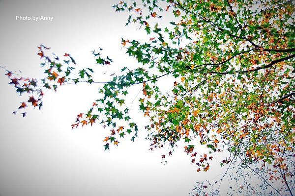 鳩之澤7.jpg