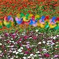 花毯節68.jpg