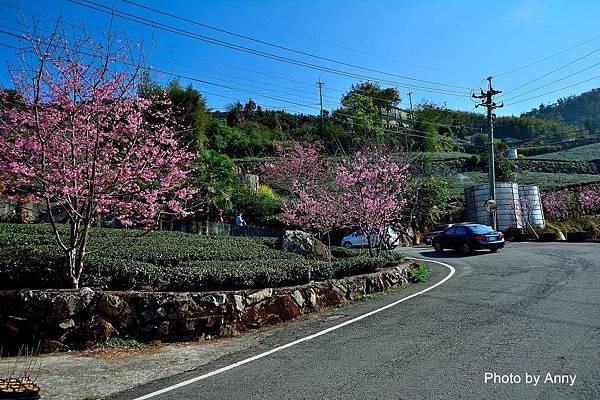 櫻之道3.jpg