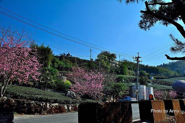 櫻之道12.jpg