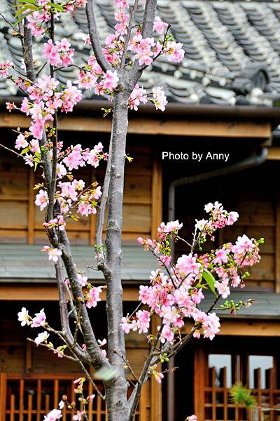 西本願寺10.jpg