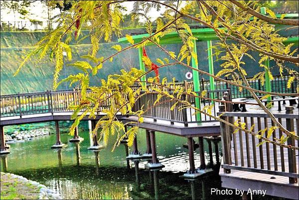 坪林公園27.jpg