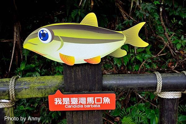 護魚步道23.jpg