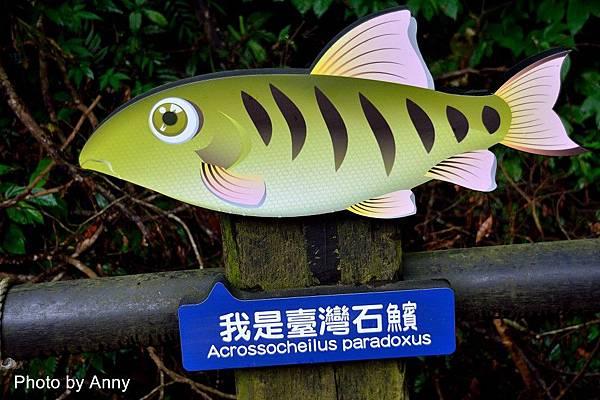 護魚步道24.jpg