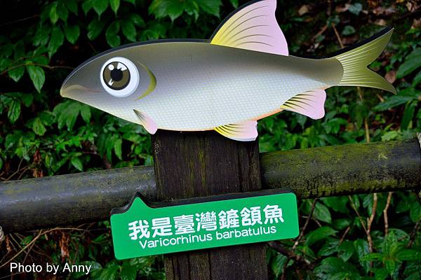 護魚步道25.jpg