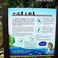護魚步道53.jpg