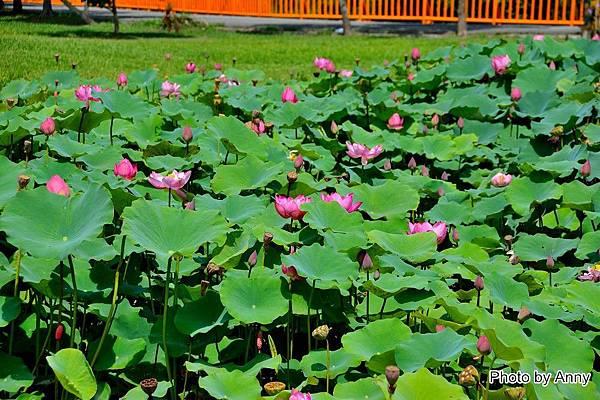 心田花園14.jpg