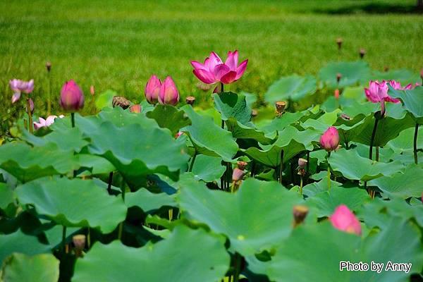 心田花園 15.jpg