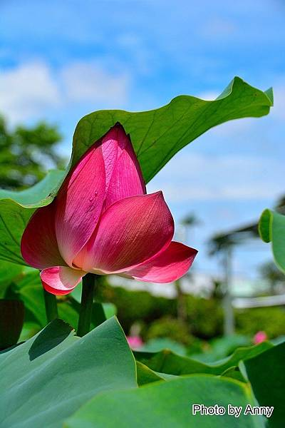 心田花園 16.jpg