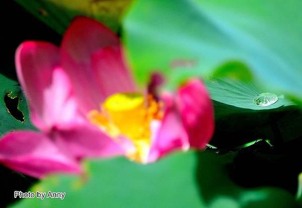 心田花園23.jpg
