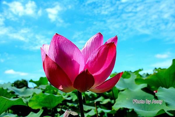 心田花園 28.jpg
