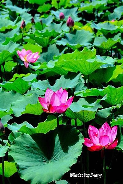 心田花園33.jpg