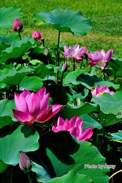 心田花園32.jpg
