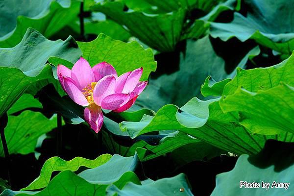 心田花園34.jpg