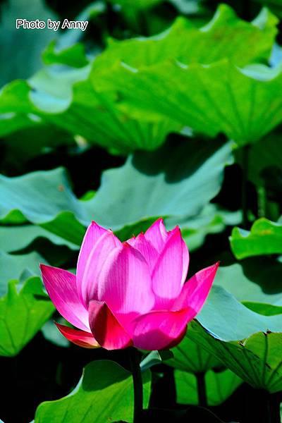 心田花園36.jpg