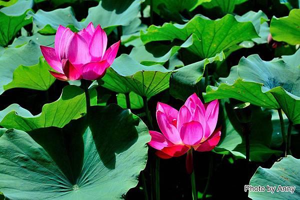 心田花園35.jpg