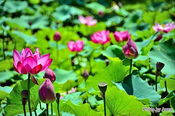 心田花園47.jpg