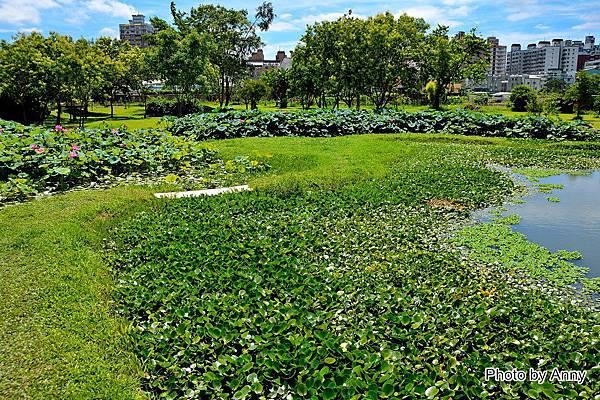 心田花園46.jpg
