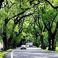 集集綠色隧道
