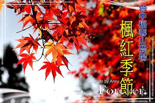 福壽山楓a1.jpg