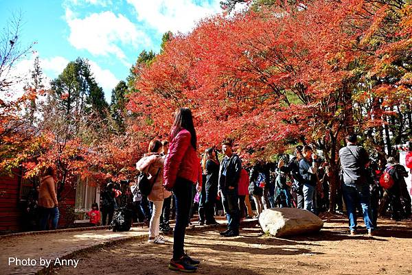 福壽山楓3.jpg