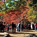 福壽山楓4.jpg