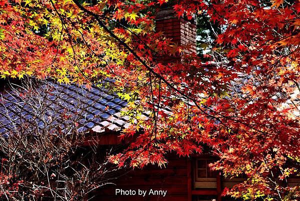 福壽山楓5.jpg