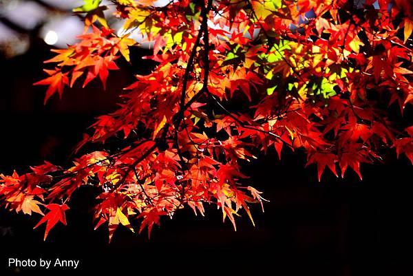 福壽山楓6.jpg