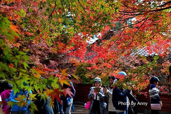 福壽山楓47.jpg