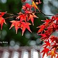 福壽山楓54.jpg