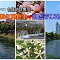 風鈴木a1.jpg