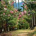 仙徠山莊56.jpg